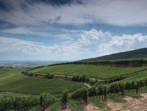 Magyarország 10 legszebb szőlőbirtoka között a Bock Pince